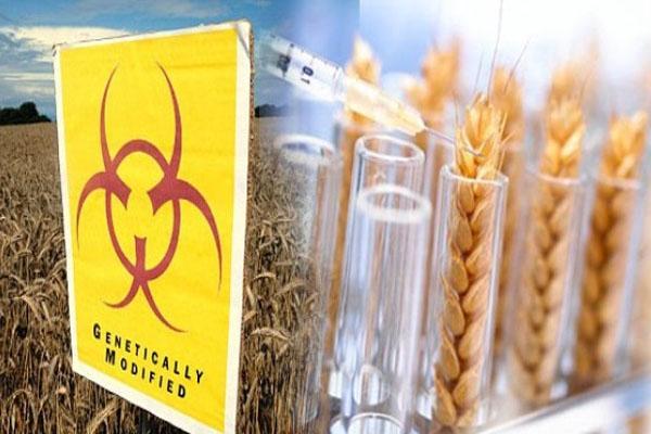 NO-al-trigo-transgenico-en-Argentina-!No-se-metan-con-nuestro-pan
